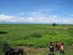 along the road in malawi 1