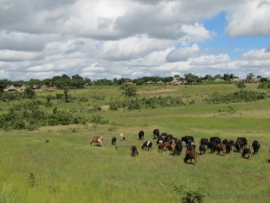 landscapes in zambia