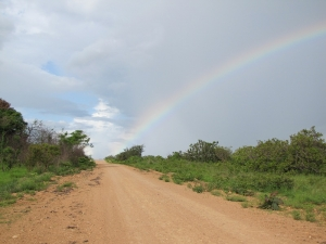 rainbow on the savanna
